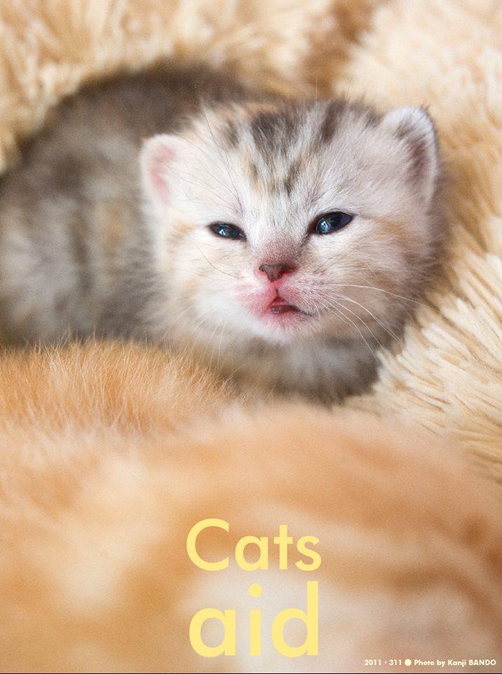 猫のチカラ