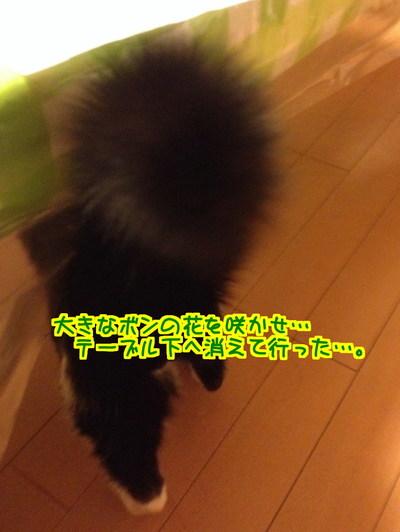 FFNk6nDmirqx1m71448638295_1448638462.jpg