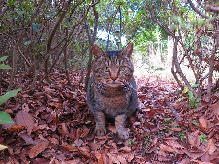 151122 墓地の猫3