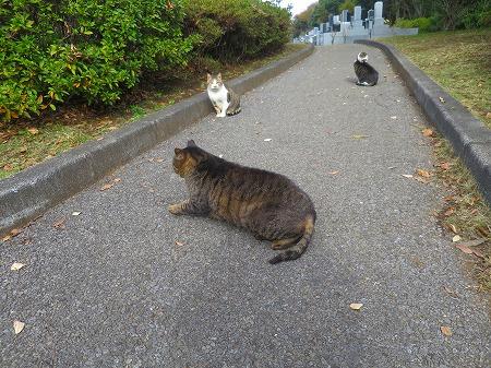 111522 墓地の猫