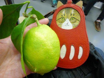 お土産のレモン
