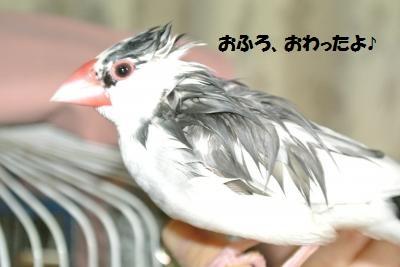 DSC_4506貂・convert_20151122233703