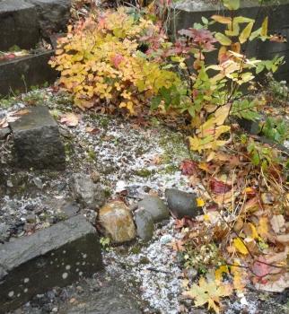 20151025 初雪と落ち葉