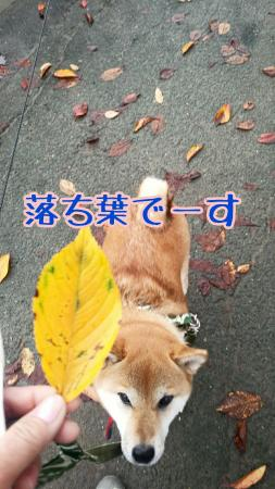 20151113110932644.jpg