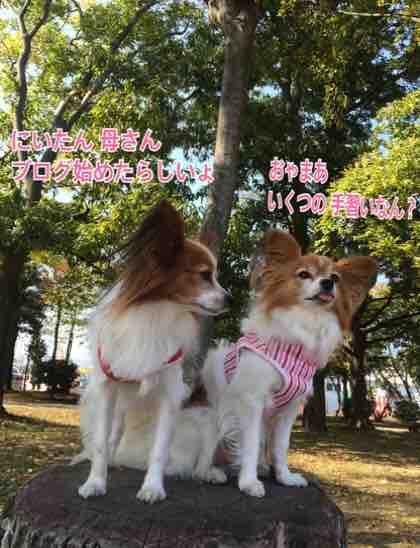 fc2blog_20151103194924d34.jpg
