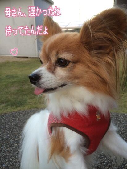 fc2blog_20151107211601ad6.jpg