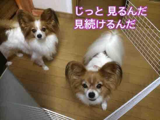 fc2blog_20151116205643d7d.jpg