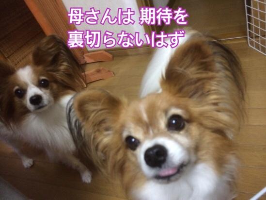 fc2blog_2015111620582154e.jpg