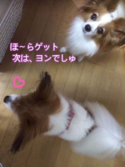 fc2blog_201511162100111b6.jpg