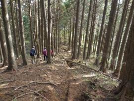 20151110大木の道々