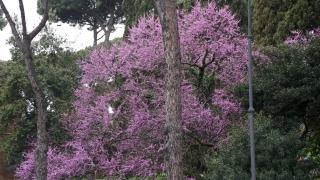 Spain Italy 0759