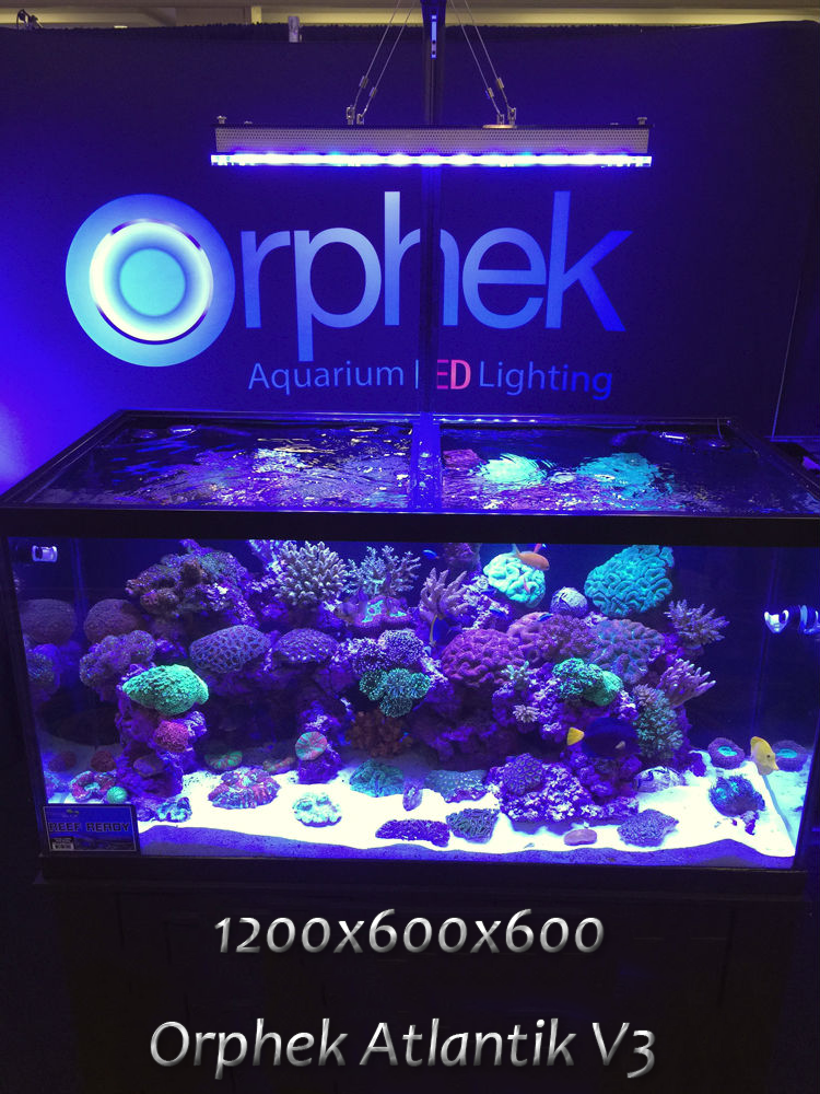48x24-aquarium-LED-lighting.png