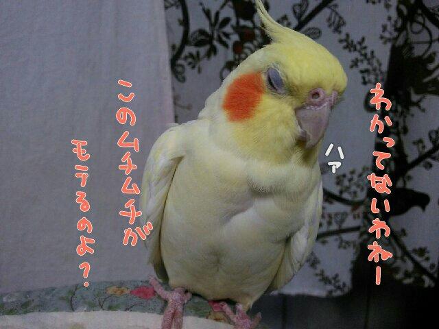 PicsPlay_1447915849394.jpg