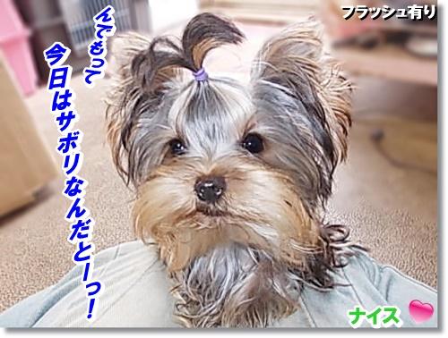 DSCN9338_2015121023042183f.jpg