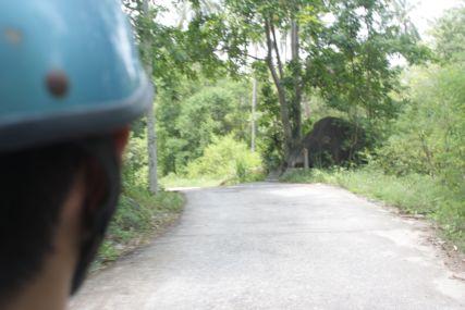 20Sepレンタバイク舗装道