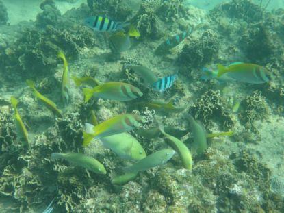 22Sepデュシブンチャ魚
