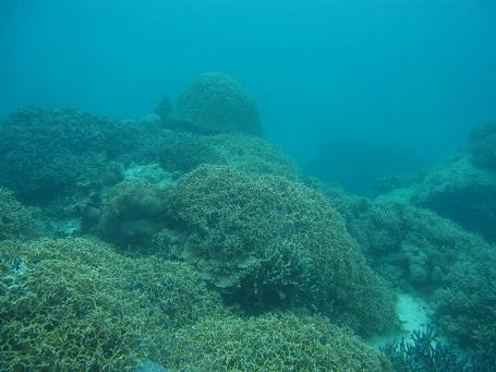 もうすでにモリモリ珊瑚!