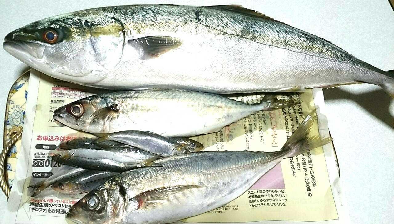 鮮魚パック・大