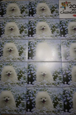 P3010591.jpg