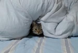 ベッド占領