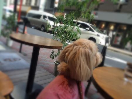 カフェからの眺め