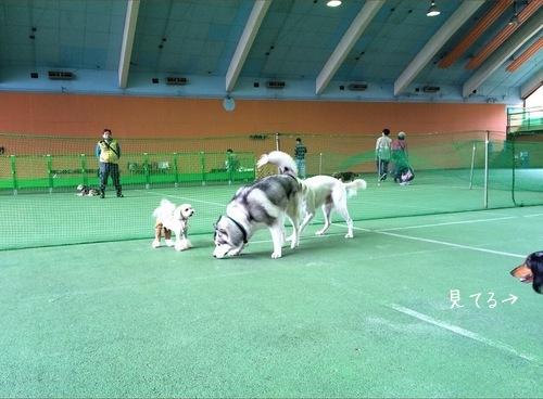 大型犬さんにワンコラ