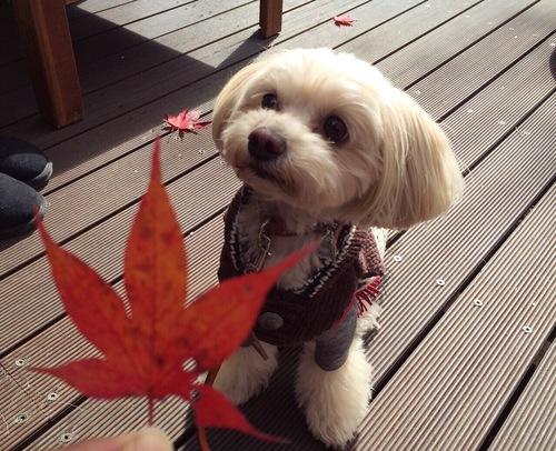 紅葉とらっくん
