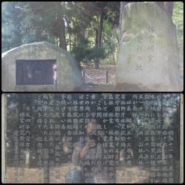 H27111611林試の森公園