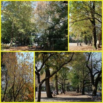 H27111607林試の森公園