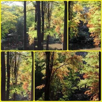 H27111608林試の森公園