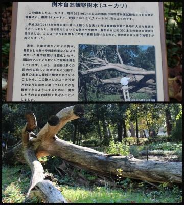 H27111612林試の森公園