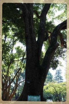 H27111610林試の森公園