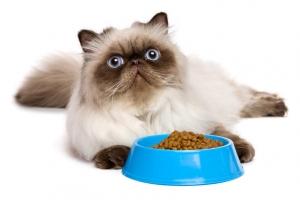 Picky eater of cat