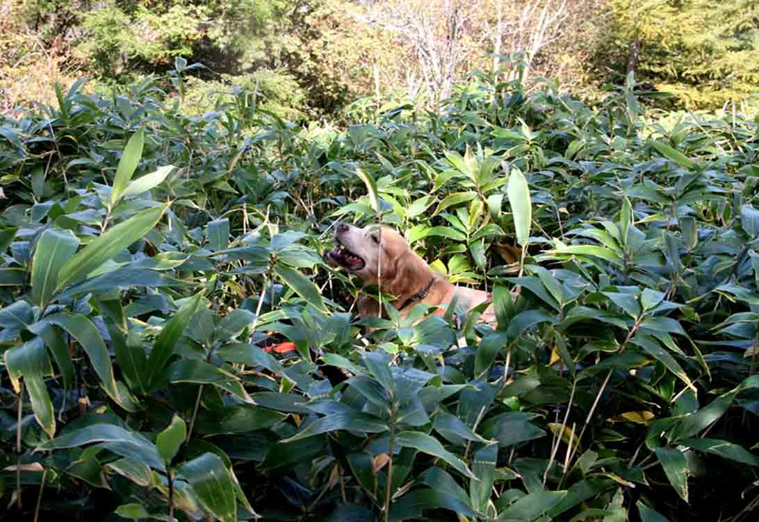 浅間山系捜索犬の旅(91)