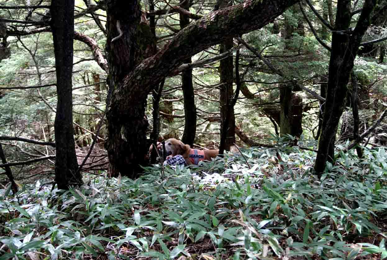 浅間山系捜索犬の旅(93)