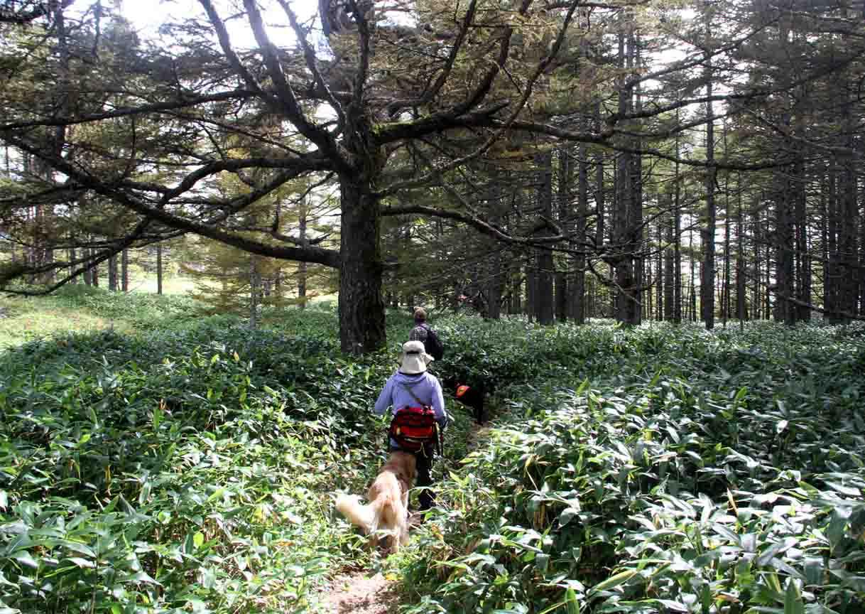 浅間山系捜索犬の旅(95)