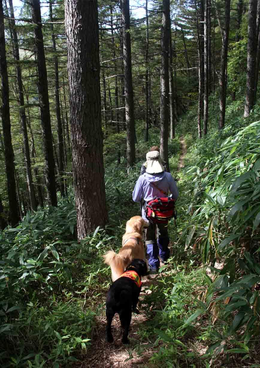 浅間山系捜索犬の旅(96)