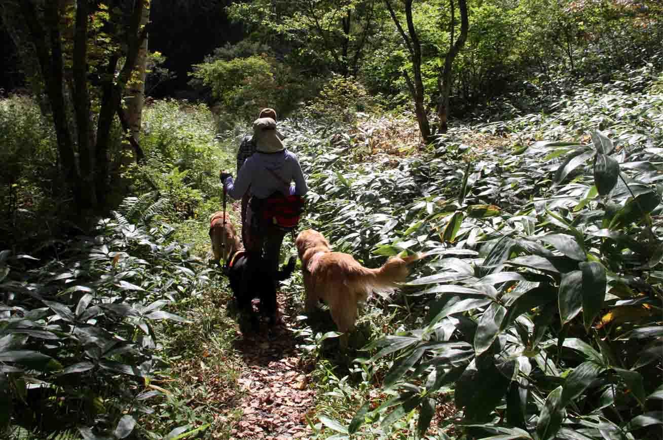 浅間山系捜索犬の旅(100)