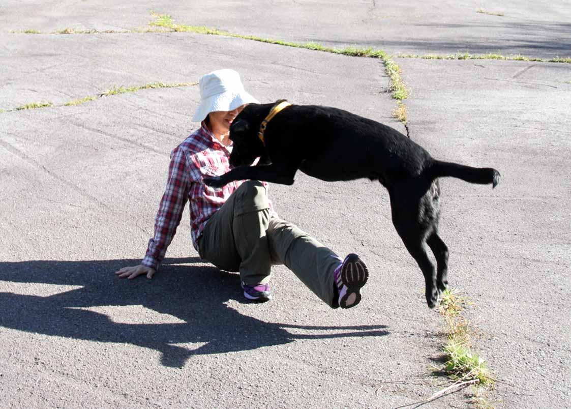 浅間山系捜索犬の旅(107)