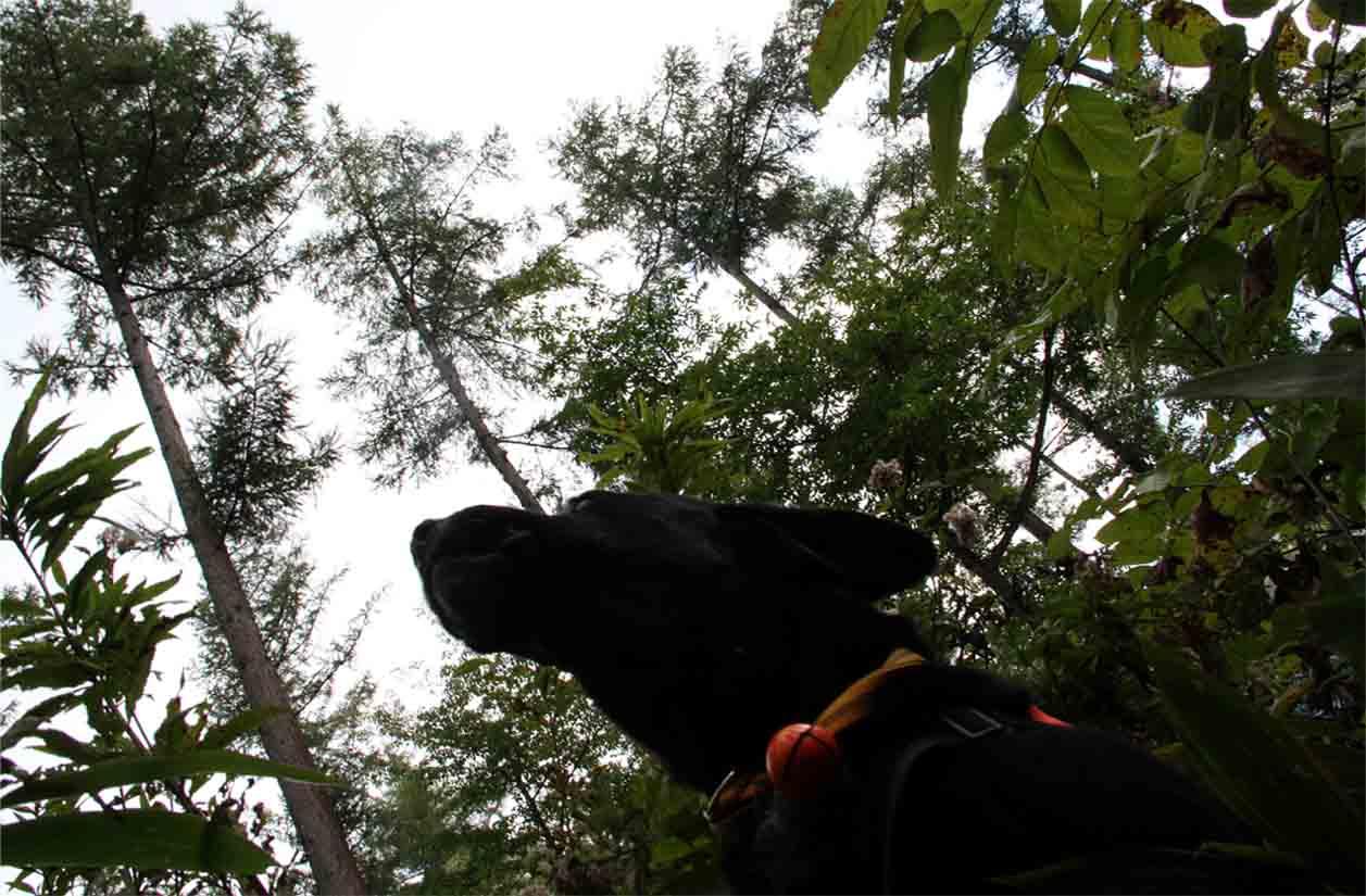 浅間山系捜索犬の旅(112)