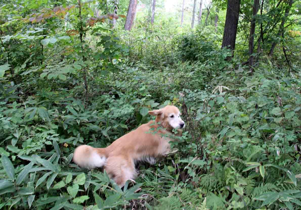 浅間山系捜索犬の旅(114)