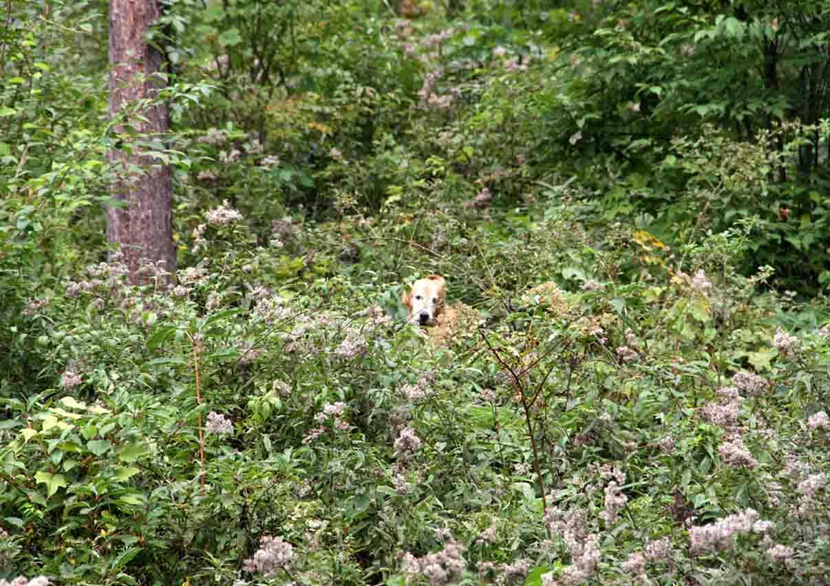浅間山系捜索犬の旅(115)