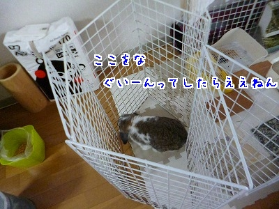 P1150937.jpg