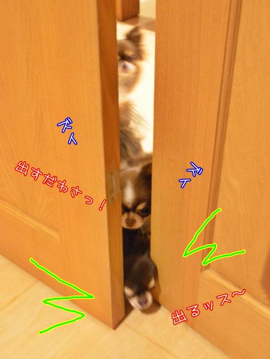 DSC_4564_2015112319183594c.jpg