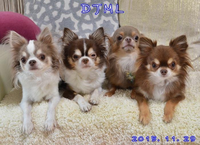 DSC_4918_20151206142707ecf.jpg