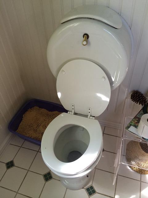 toilet-513045_640.jpg