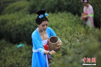 中国茶摘娘 1