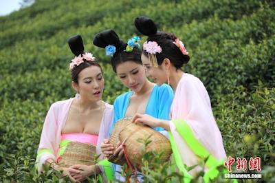 中国茶摘娘 2