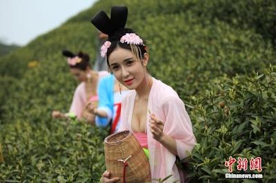中国茶摘娘 3