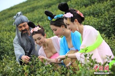 中国茶摘娘 4
